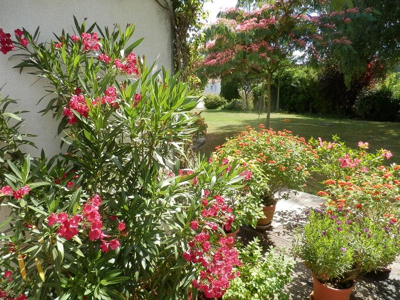 Plantes En Fleurs Et Arbustes Fleuris Pour Chaque Mois De