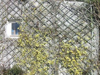 grimpantes sur treillis au jardin d 39 agr ment. Black Bedroom Furniture Sets. Home Design Ideas