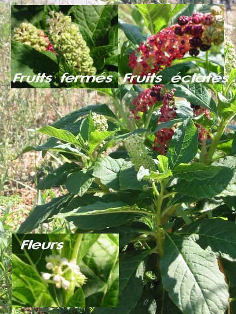 Avis de recherche plante jardin agr ment for Recherche plante