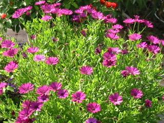 Culture de plantes en pots for Plante grasse exterieur vivace